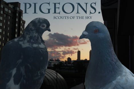 Awesome Pigeon Photo
