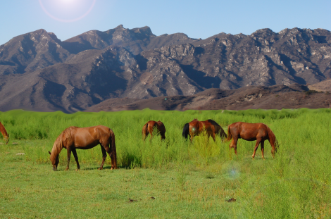Photo edit of horses and mountains